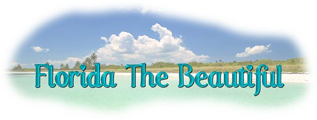 Florida The Beautiful Header created by WooWebDesigns.com